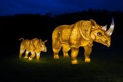 Lanterna illuminata dell'esposizione di rinoceronte fotografie stock libere da diritti