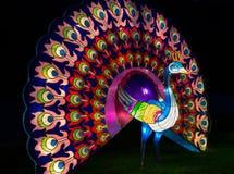 Lanterna iluminada do pavão imagem de stock