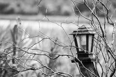 Lanterna na natureza para o conceito apenas ou o horor Imagens de Stock Royalty Free