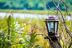 Lanterna na natureza para o conceito apenas ou o horor Fotos de Stock