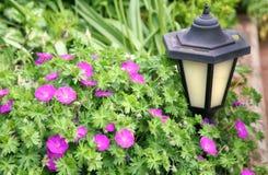 Lanterna solar do jardim imagem de stock royalty free