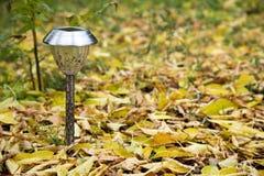 Lanterna solitária Fotografia de Stock Royalty Free