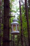 Lanterna su un albero Immagine Stock