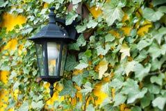 Lanterna su una parete coperta di piante Fotografia Stock Libera da Diritti