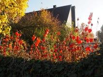Lanternas chinesas no jardim da casa de campo Imagens de Stock