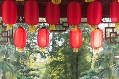Lanternas chinesas vermelhas que penduram com as árvores na luz solar no backg Fotos de Stock