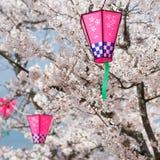 Lanternas cor-de-rosa em árvores da flor de cereja Imagem de Stock