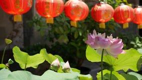 Lanternas de papel vermelhas que penduram na jarda do templo no dia ensolarado entre as hortali?as suculentas no pa?s oriental Ch vídeos de arquivo