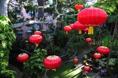 Lanternas de suspensão chinesas da decoração tradicional do ano novo em uma árvore Imagem de Stock Royalty Free