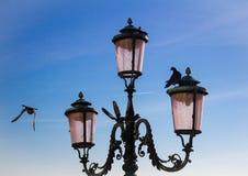 Lanternas e pombas fotos de stock