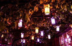 Lanternas em uma árvore - Turquia Imagem de Stock