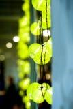 Lanternas verdes no café na escuridão Foto de Stock Royalty Free