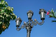 Lanterne avec des pigeons Image stock
