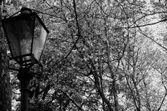 Lanterne dans les bois Photographie stock