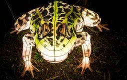 Lanterne de crapaud rougeoyant dans l'obscurité Photo libre de droits