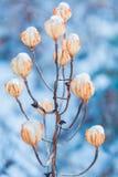 Lanterne de glace Photo stock