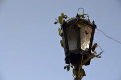 Lanterne de rue enlacée avec le lierre Image stock