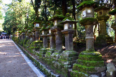 Lanterne di pietra in Nara Park, Giappone Immagini Stock