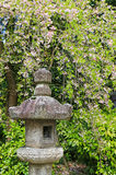 Lanterne en pierre japonaise sous des arbres de fleurs de cerisier de Sakura Photos libres de droits