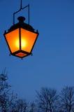 Lanterne et branchements Photos stock