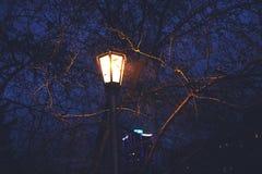 Lanterne parmi les branches Image libre de droits