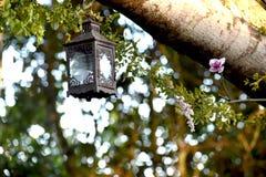 Lanterne pendant de la branche d'un arbre image stock