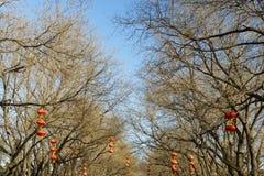 Lanterne rosse sugli alberi Fotografie Stock
