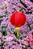 Lanternes chinoises Photo libre de droits