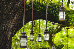 Lanternes pendant de l'arbre Photos stock