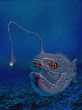 Lanternfish Royalty Free Stock Photos
