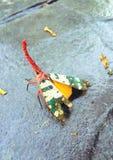 Lanternflies Fotos de Stock Royalty Free