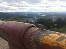 Lanternfly dans le paysage du comté de Berks image libre de droits