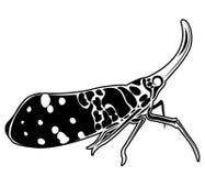 Lanternfly, el insecto en las frutas de árbol Imagenes de archivo