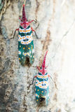 Lanternfly, the insect on tree stock images