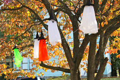 Lanterns as the of hats hanging on trees Stock Images