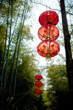 Lanterns in bamboo forest Royalty Free Stock Images