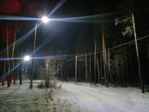 Lanterns in the forest giving glare. Large glare bands, pines in the shade, road in the forest Stock Images