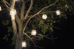 Lanterns hanging from tree Stock Image