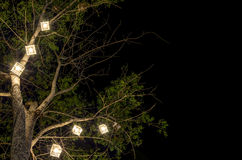 Lanterns hanging from tree Royalty Free Stock Images