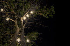 Lanterns hanging from tree Stock Images