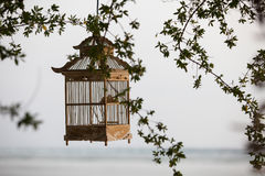Lanterns hanging from the trees to decorate at sunset bird cage. Lanterns hanging from the trees to decorate at sunset - made of wood: cage Lamp bird Stock Photos