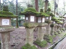 Lanterns and moss stock image