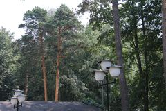 Lanterns and pines in the city of Korolev royalty free stock photos