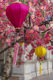Lanterns and pink flowers Royalty Free Stock Image