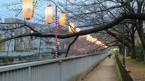 Lanterns in Sakura Festival at walkway, Tokyo, Japan. stock video