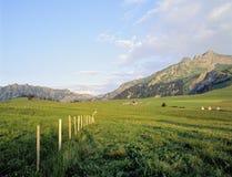 Lantgård för berglandskapSchweiz Vaud Praz kornett Arkivbilder