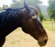 Lantgård för häst Head Arkivfoto