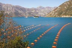 Lantgård för mussla för kultur för Longlinekulturrep Montenegro fjärd av Kotor fotografering för bildbyråer