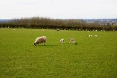 Lantgård i Bedfordshire Royaltyfri Fotografi