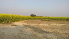Lantgård i norr Indien fotografering för bildbyråer